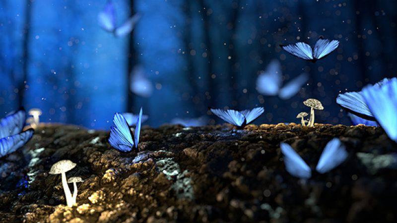 Vlinders in je buik hebben