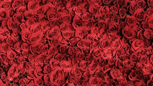 Roses dating site Hoe lang na dating moet je bewegen in