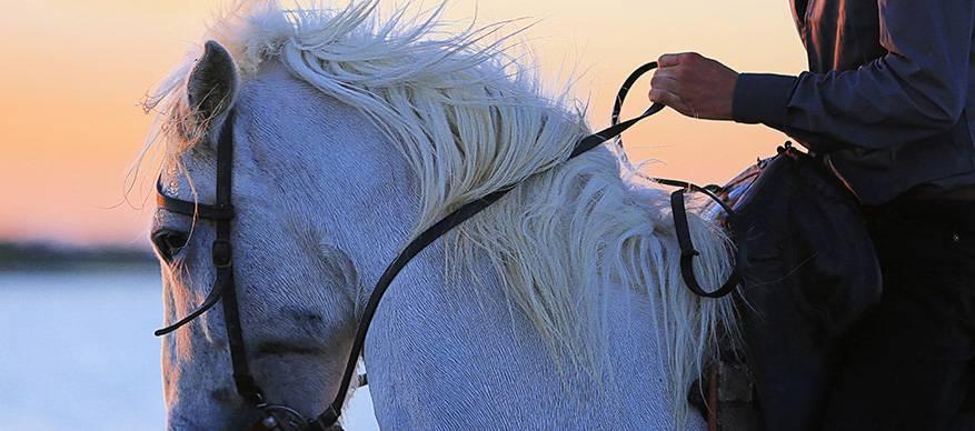 prins op het witte paard