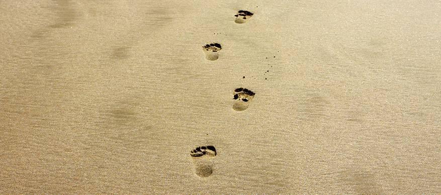 voetafdrukken